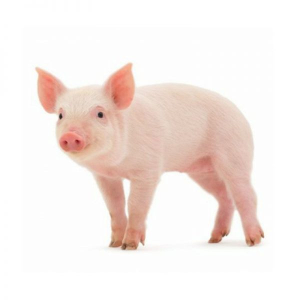 Комбикорм для откорма свиней