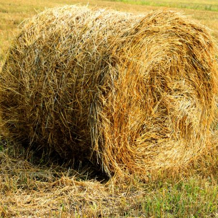 купить сено в москве