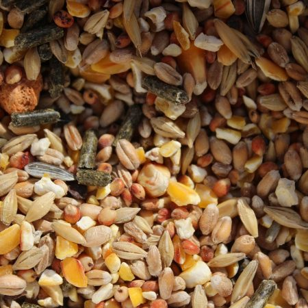 Эко-корма для питомцев